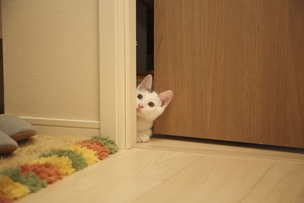 Cute kitten opening the door